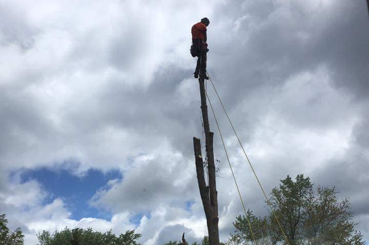 southern ontario tree specialists